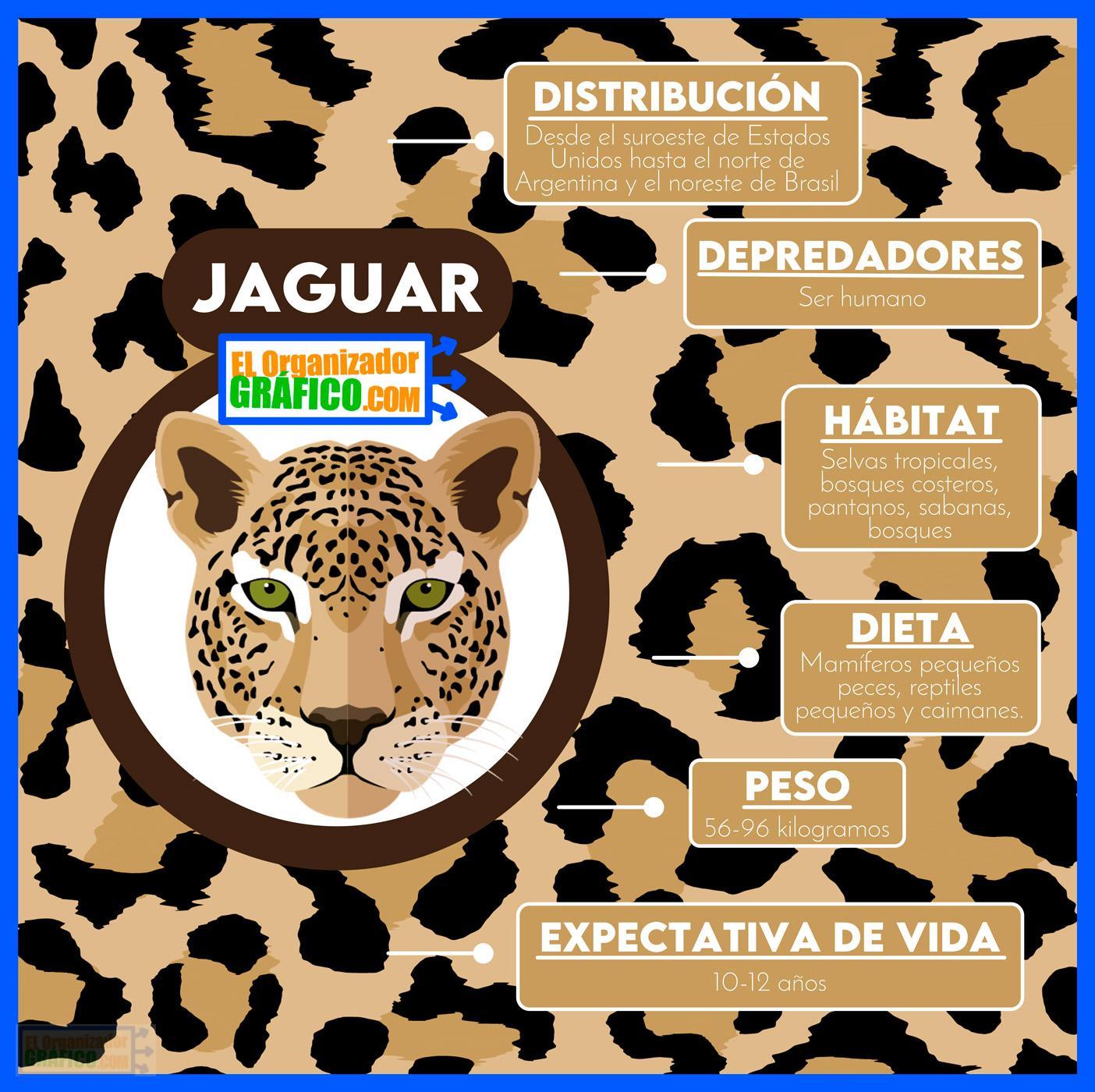 Infografias De Animales En Extincion Jaguar